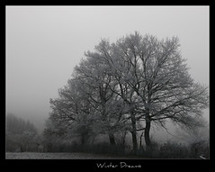987 Winter Dreams 13 (Nebojsa Mladjenovic) Tags: winter light sky mist france cold tree art nature monochrome fog digital rural dark french landscape outdoors lumix frankreich burgundy hiver panasonic ciel frankrijk bourgogne campagne francia arbre zima priroda brouillard morvan francais fz50 drvo yonne svetlost mladjenovic bestcapturesaoi mygearandmepremium mygearandmebronze mygearandmesilver mygearandmegold