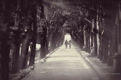 Memory Lane (Violet Kashi) Tags: old trees light bw monochrome photography couple boulevard shadows path rays sunbeams  hss sliderssunday