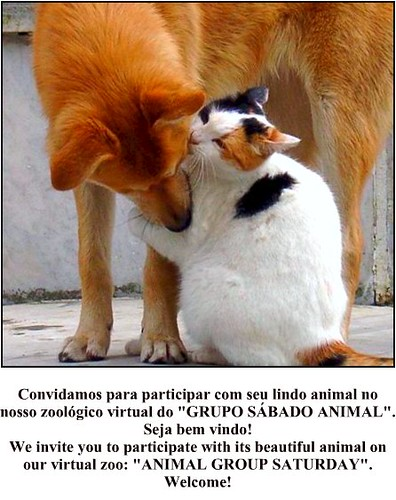 Grupo Sábado Animal.