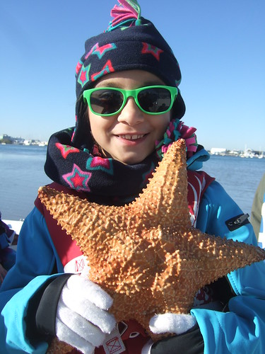 Katie's big starfish