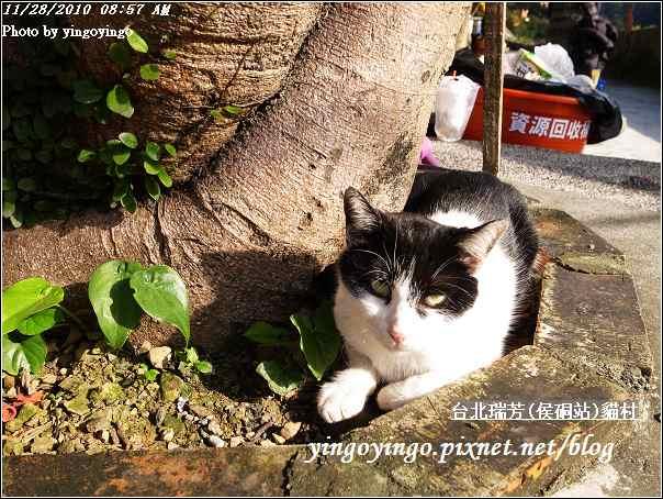 台北瑞芳(侯硐站)貓村20101128_R0016303