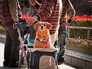 Dog in a pram