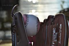 Sweet spot (Laurarama) Tags: leather nikon baseball catch mitt sweetspot ourdailychallenge d3100 collectionp