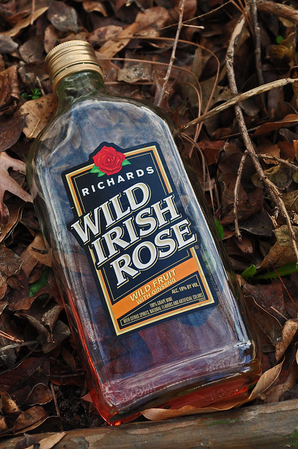 Rosa hiberniana 'Richard'