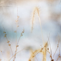 winter poetry ... splendour in the grass (pixelmama) Tags: grass weeds gettyimages christmasday hss edwardsburgmichigan sliderssunday