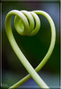 _MG_9139 (Kelvin_) Tags: plant green long twist twirl kelvin shape hold creep supershot 15challengeswinner damniwish windmillsspirals bestofdamn rumsby