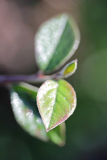 a shy leaf
