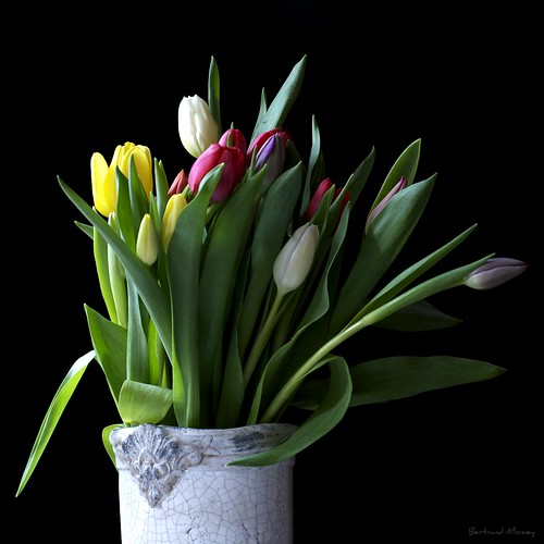 photo tulipes pot de terre & Co. version 500/500