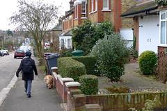 Walking the dog - 3 (jovike) Tags: dog animal fauna barnet newbarnet espe
