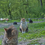 "Cat meeting • <a style=""font-size:0.8em;"" href=""http://www.flickr.com/photos/28211982@N07/14059675053/"" target=""_blank"">View on Flickr</a>"