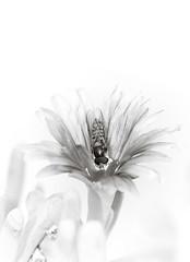0207 - GD - Flickr (Grazia D'amato) Tags: ape api bee bees fiore fiori flower flowers pianta piante plant plants vegetazione vegetation natura nature stilllife macro closeup giardino garden petalo petali petals stelo stem foglia foglie leaf leaves flora botanica botany selvaggio wild