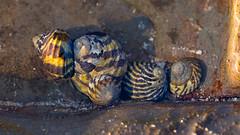 Cluster (RoosterMan64) Tags: australia macro nsw whalebeach