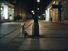 Loyalty (OverdeaR [offline 'til July]) Tags: light dog 120 film canon mediumformat downtown fuji serbia streetphotography scan lamppost pro hood push belgrade tied expired beograd available mamiya645 srbija 1000s c41 kelvins npz800 8019 m645 8800f 800z mamiya6451000s mamiyasekorc80mmf19 shot1600 cs8800f ljubina sekorc8019 developed3200 ika razviokodkrletamajstora