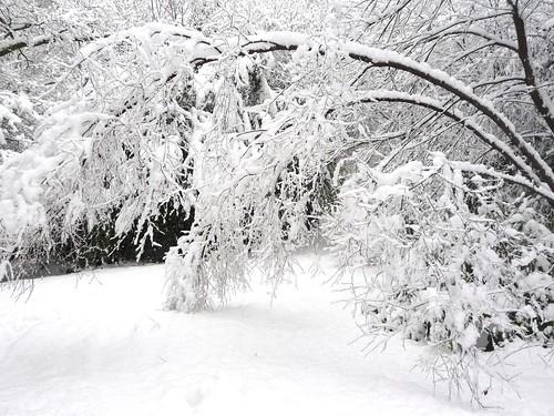 Snow Scene at Rouken Glen
