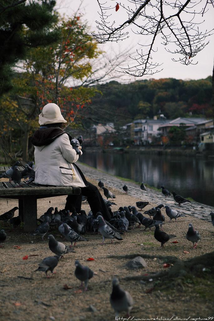 京阪散策 洛南篇