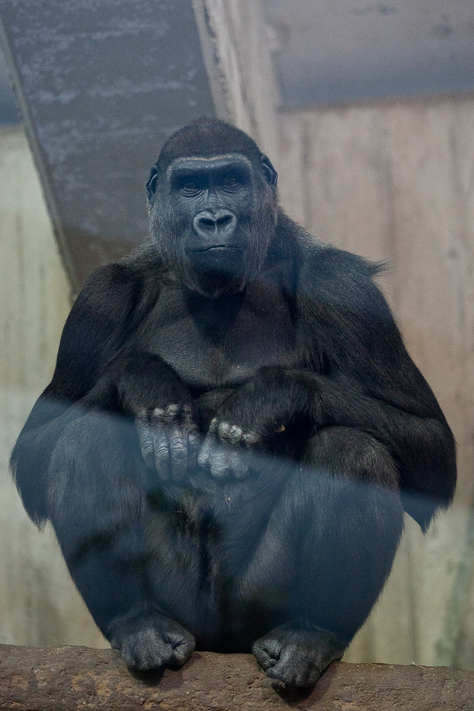 The Well Groomed Gorilla