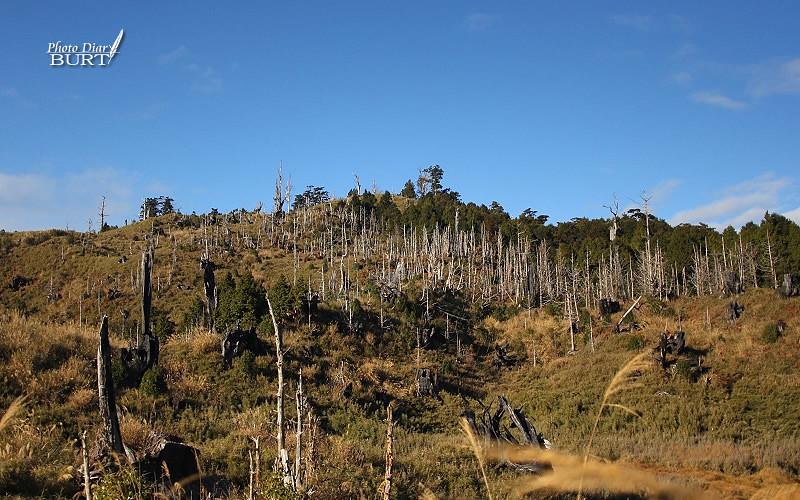白樹林圍繞的加羅山