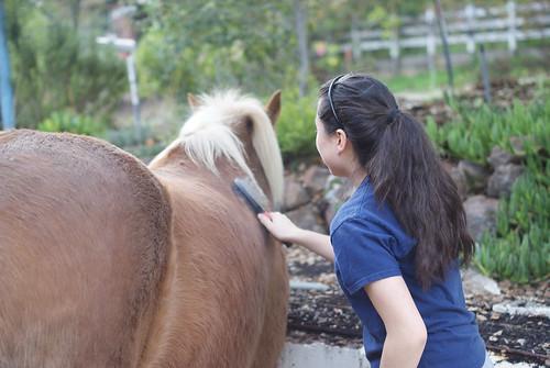 I washed a horse.