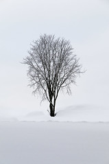 One Tree On Top Of The Hill (pni) Tags: street winter sky white snow black tree nature suomi finland dark vinter helsinki ground helsingfors tones talvi skrubu pni pekkanikrus