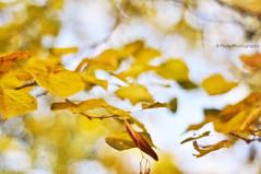 Autumn Feelings [HBW - Edition} (Mijn Focus Photography) Tags: autumn red copyright brown fall field yellow blauw shoot dof bokeh herfst end geel rood depth feelings bruin einde diepte