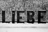 * (...storrao...) Tags: blackandwhite bw snow berlin germany garden deutschland nikon pb mitte pretoebranco liebe d90 storrao sofiatorrão nikond90bw
