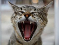 Wazzuuuuup! (Aspiriini) Tags: cat kat katze katt kissa wazzup
