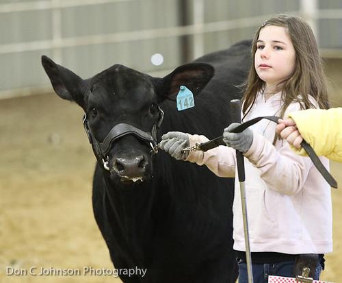 Terrell FFA Holiday Heifer Show-2169