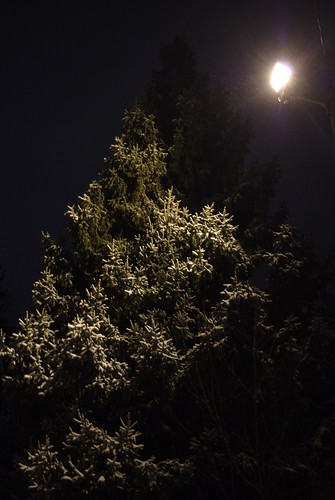 Tree, Snow, and Streetlamp