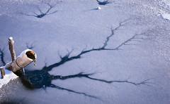 Broken (calysbo) Tags: lake ice lago neve ghiaccio lagoghiacciato ghiacciato