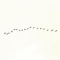 M (donchris!™) Tags: bird minimal explore minimalism minimalistic oiseau vogel pájaro uccello ptak minimalistisch minimalismus minimalistica
