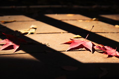 /light fall (michaelrpf) Tags: autumn landscape maple taiwan resort theme     aowanda