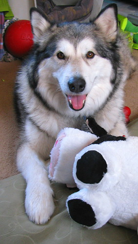 Luka likes the stuffed cow