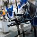 Regal Horses
