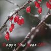Happy New Year 2011 (NaPix -- (Time out)) Tags: new red white snow canada macro nature fruit happy year 2011 napix itsnotawolfberry nowreadingthedaylastsmorethanahundredyearsbychingizaitmatov