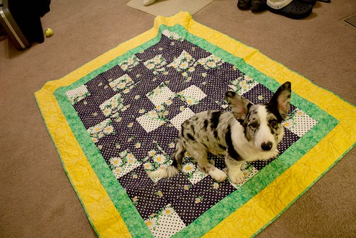 Finished Daisy Quilt Revealed