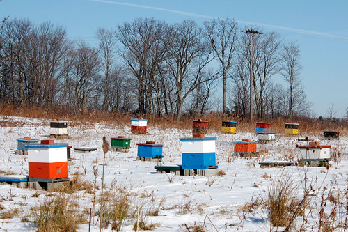 beehives by passer-by, on Flickr