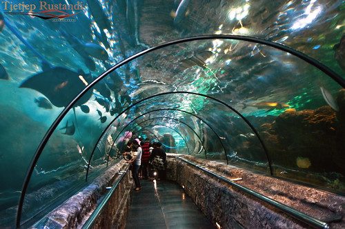 """Sea World Tunnel"""