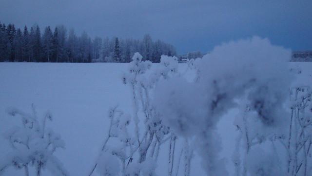 MÖKSÄLLÄ 2010-2011 272