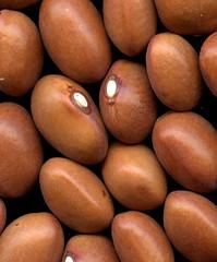 38462 seeds (Phaseolus) (horticultural art) Tags: macro closeup beans uniform seeds horticulture eyetoeye hereslookinatyou phaseolus horticulturalart