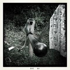 IMG_1492 (wittgenstein.it) Tags: sudafrica