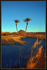 Desert Palms (Geo_grafics) Tags: city vegas wild vacation color nature colors america sunrise garden golf golden nikon colorful nevada wide d2x gimp sparkle majestic lowes goldenhour 702 funnin colrful golfcoarse fotocompetition fotocompetitionbronze fotocompetitionsilver fotocompetitiongold lakeoflasvegas