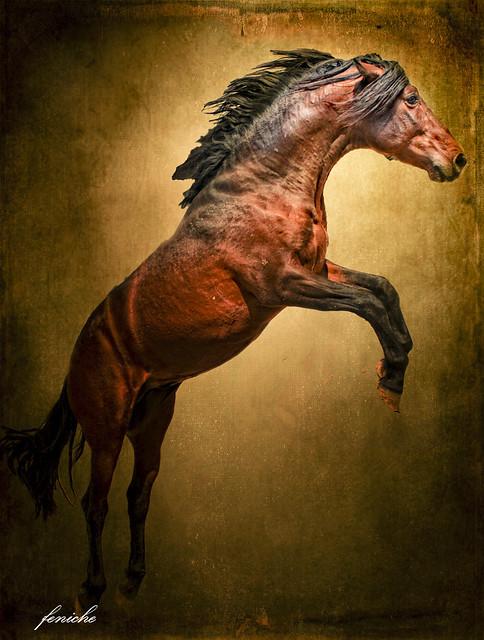 caballo en salto