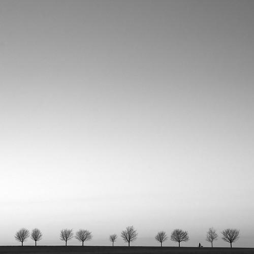 フリー写真素材, 自然・風景, 樹木, モノクロ写真,