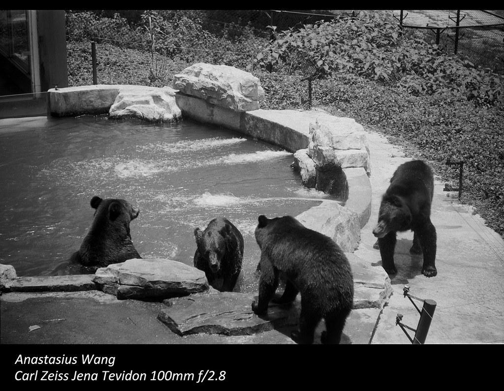 SZ Zoo 08