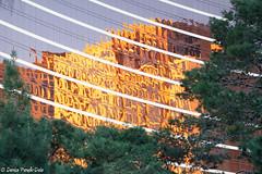Las Vegas CES Photo Essay-26 (dpanyikdale) Tags: show las vegas reflection eos rebel photo essay lasvegas thestrip ces f28 tradeshow efs60mm lasvegasstrip wynnhotel 2011 efs60mmf28macro efs60mmf28 t1i canonrebelt1i