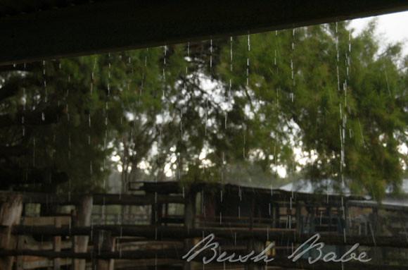 rain_0392