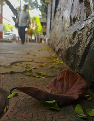 029/365 - A Plot Most Sinister! (Imli Jamir [Nebullexus Impressions]) Tags: street trees people brown man blur green photography leaf colours bokeh pavement 365 mumbai footpath
