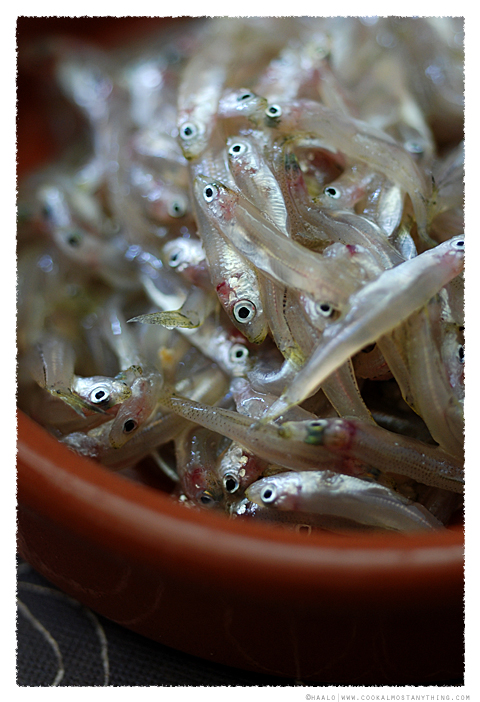 whitebait© by Haalo