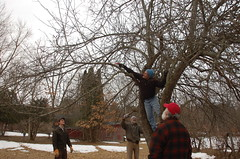 "Apple Pruning: A Group Effort <a style=""margin-left:10px; font-size:0.8em;"" href=""http://www.flickr.com/photos/91915217@N00/13528297903/"" target=""_blank"">@flickr</a>"