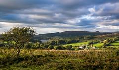 Autumn evening on Dartmoor_NK2_2791 (Jean Fry) Tags: burrator dartmoor dartmoornationalpark devon englanduk moorland nationalparks uk westcountry hawthorn